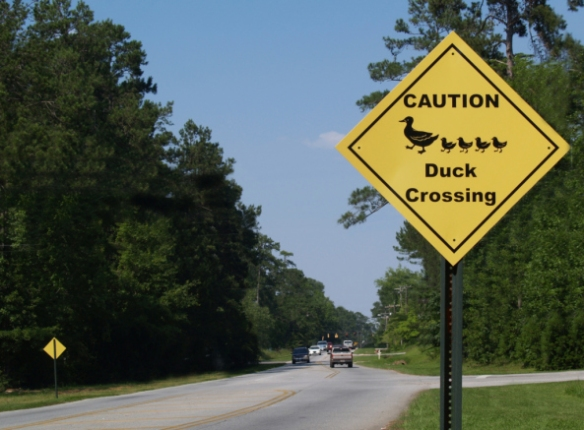 Duck Crossing